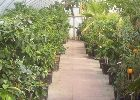 At Global Orange Groves we have a wide selction of Citrus Trees for Sale