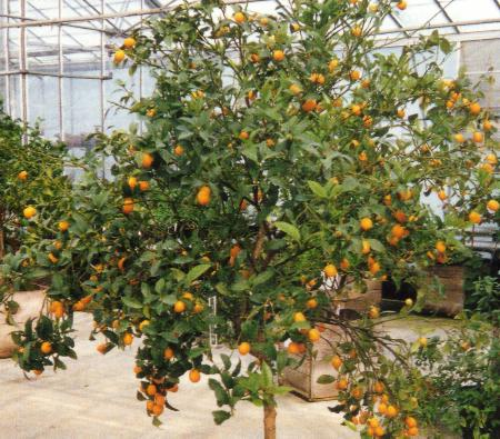 Click on the picture to return